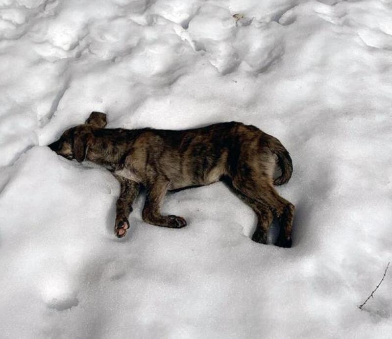 Çöp depolama alanında ölü köpekler bulundu