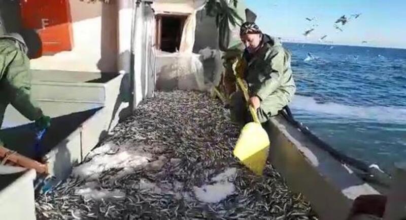 Tekirdağ'da umduğunu bulamayan balıkçılar Karadeniz'e açıldı