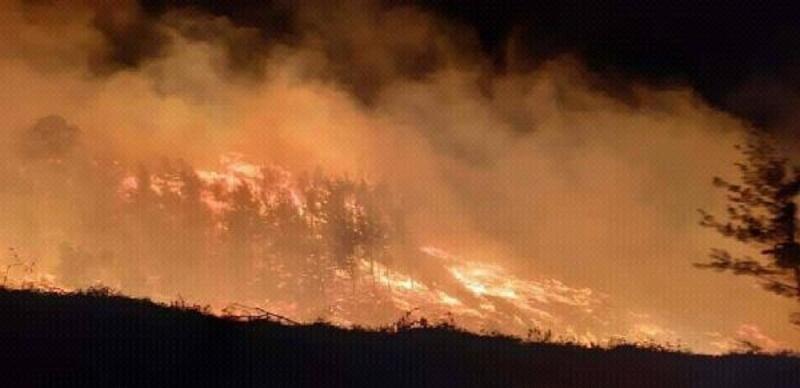 Adana'da 6 saatlik orman yangını; 20 hektar alan kül oldu