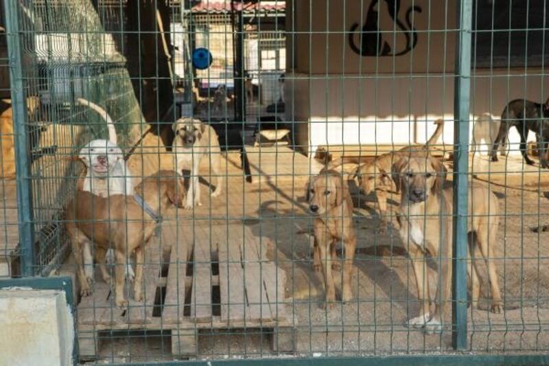 10 ayda 1500 kedi ve 2 bin köpek iyileştirildi