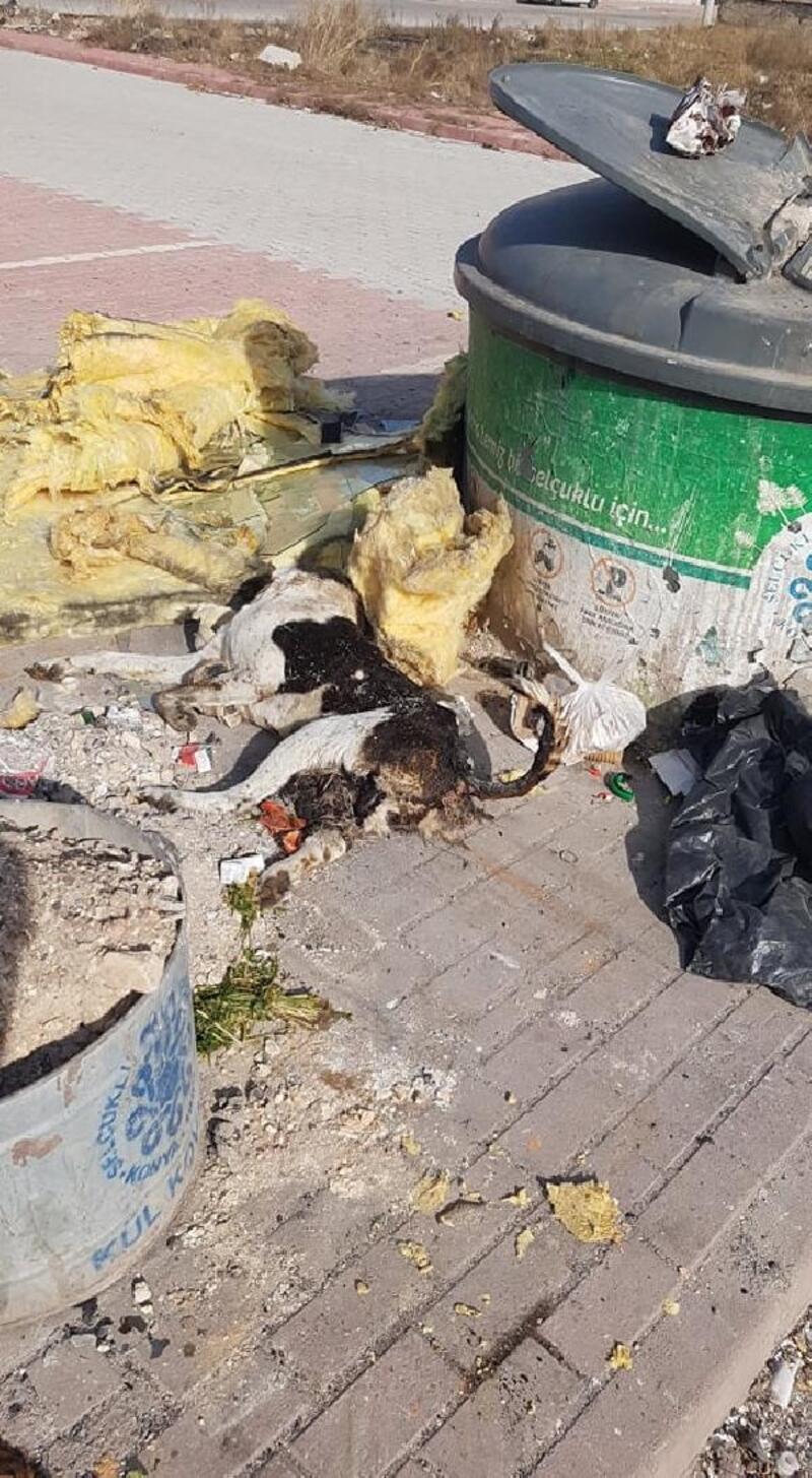 Çöpte bir kısmı yanmış köpek ölüsü bulundu