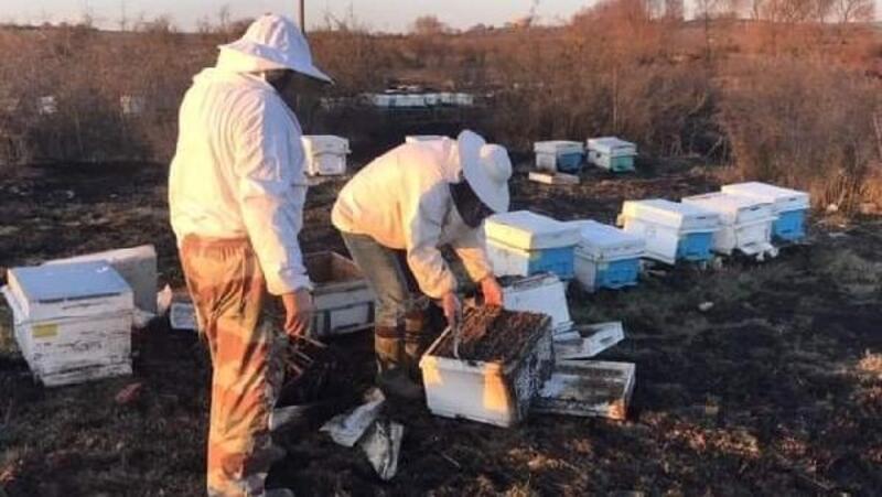 Çan'da otluk yangınında 30 arı kovanı yandı