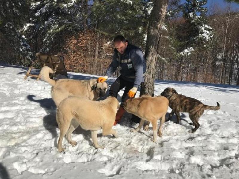 Uludağ'daki köpeklere mama desteği