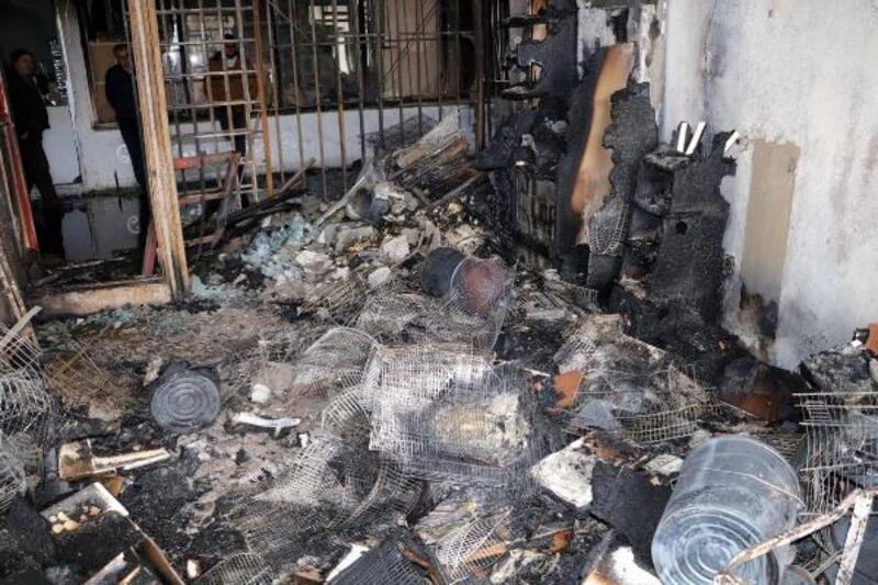 Yozgat'ta petshopta çıkan yangında kuşlar telef oldu