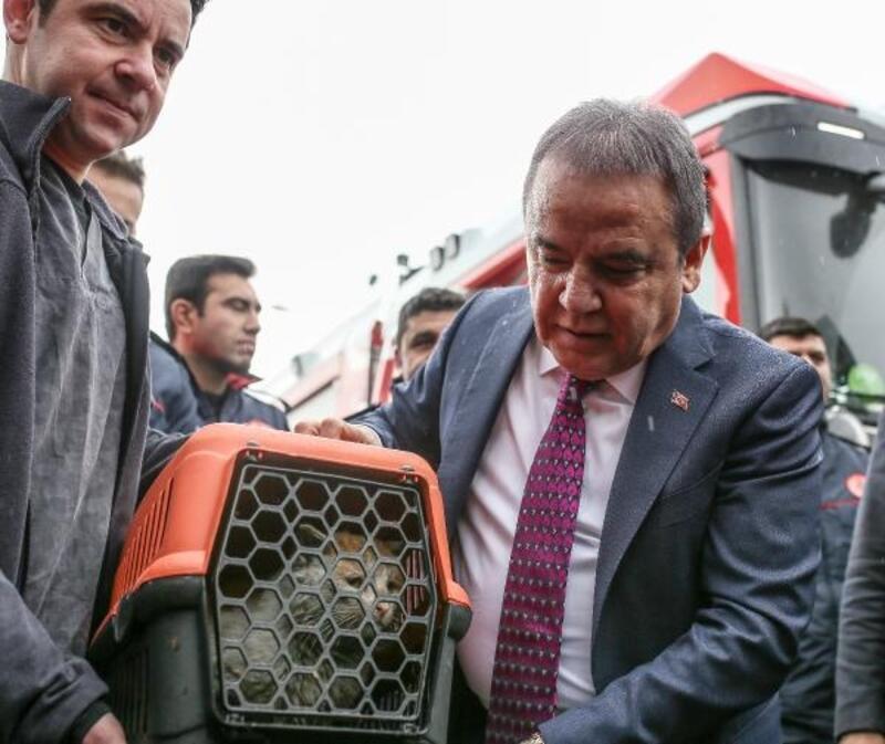 Depremzede kedi, Antalya'da tedavide