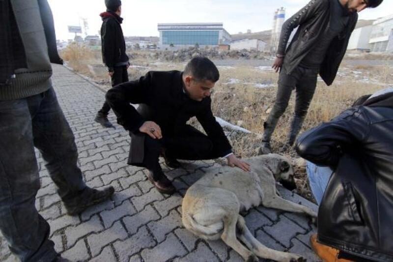 Erciş'te yaralı köpeğe kaymakam sahip çıktı