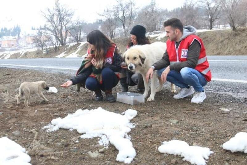 Kızılay'dan deprem bölgesindeki hayvanlar için mama
