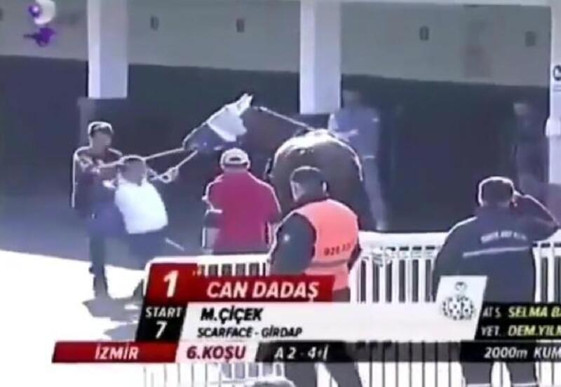 Atına şiddet gösteren sahibe ceza geliyor