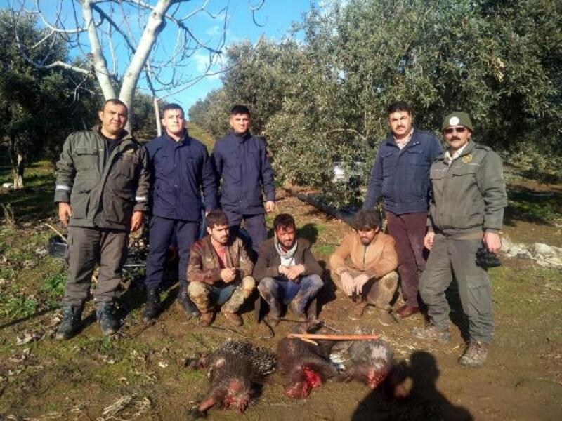 'Eti şifalı' diye oklu kirpi avlayan 3 kişiye 40 bin lira ceza