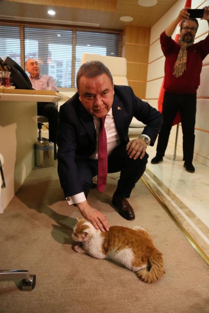 Kedi 'Toros'un yeni yeri, başkanın makamı