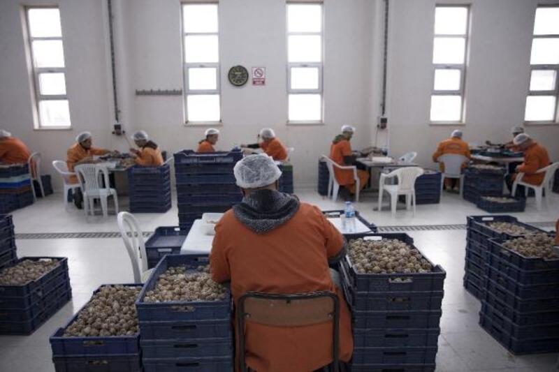Türk cezaevinden Avrupa'ya 20 milyon salyangoz ihracatı-Yeniden