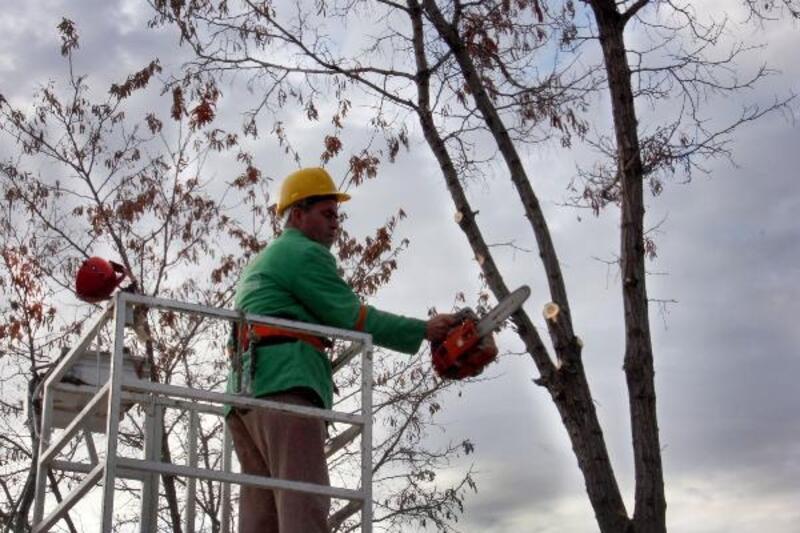 Çankaya'da 4 bin 599 ağaç budandı