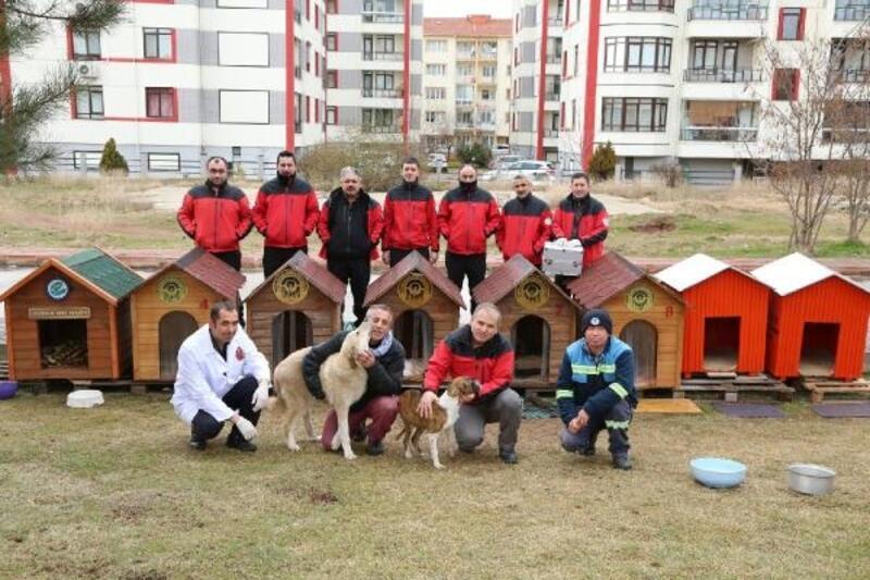 Odunpazarı'ndan sokak hayvanları için kulübe