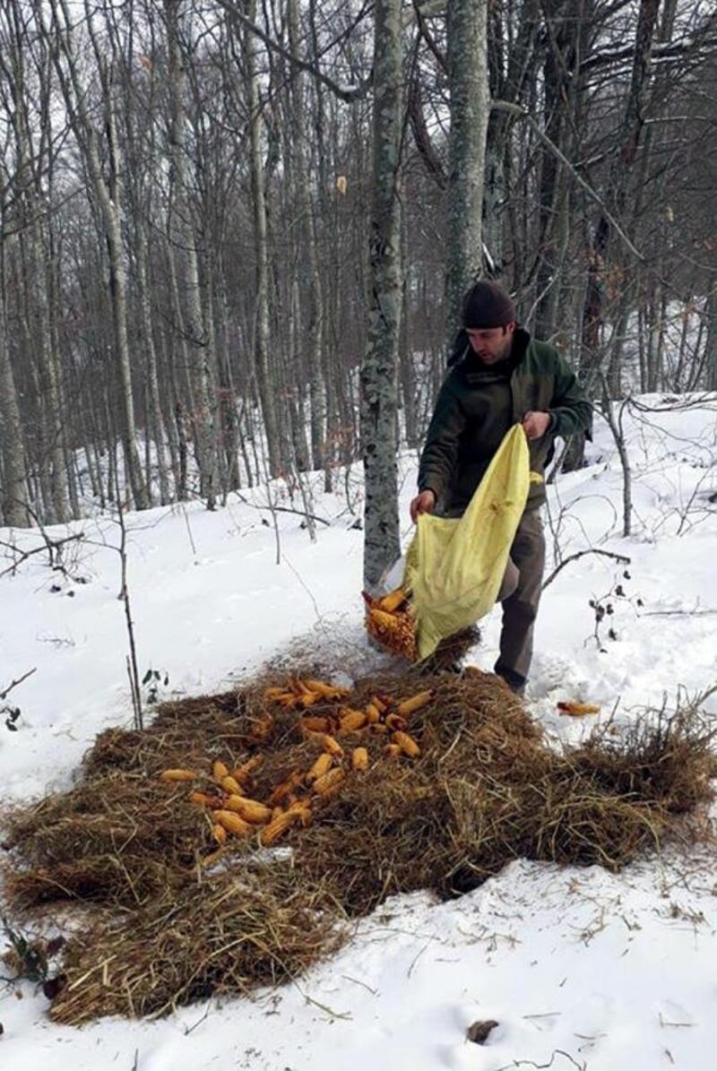 Kırklareli'de yaban hayvanlarına yem bırakıldı
