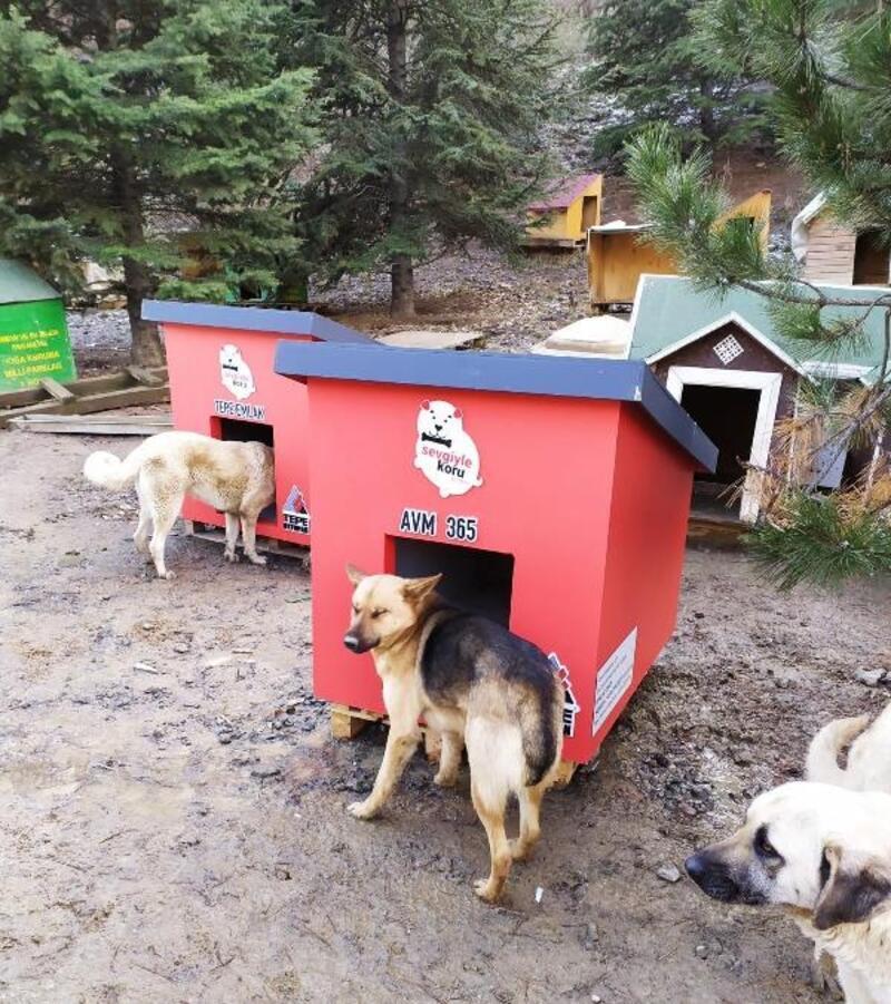 Sokak hayvanları için özel kulübe
