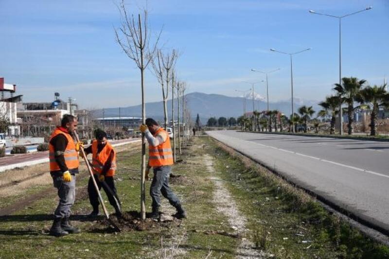 Osmaniye'de, 10 bin ağacı toprakla buluşturuluyor