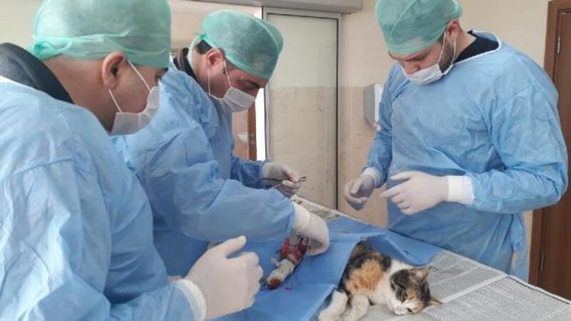 Otomobilin çarptığı yaralı kedi tedavi edildi