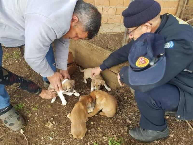 Foseptik çukuruna düşen yavru köpekler kurtarıldı