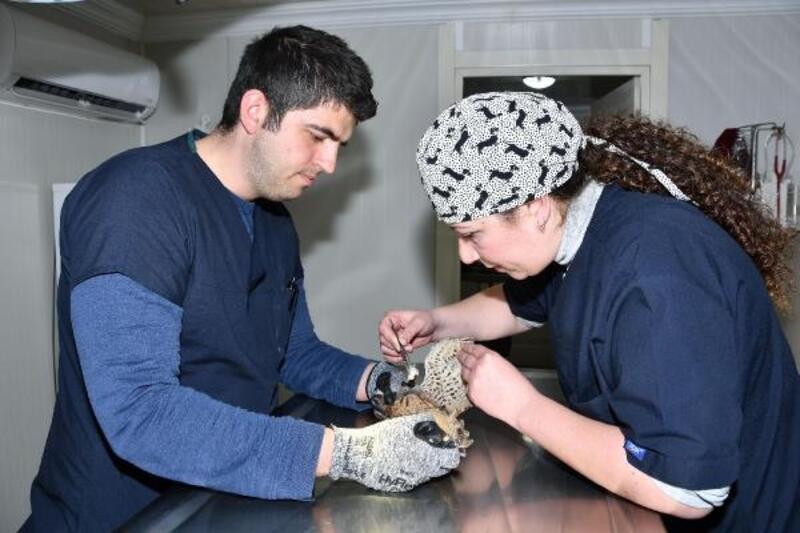 Yaralı atmaca Narlıdere'de tedavi edildi