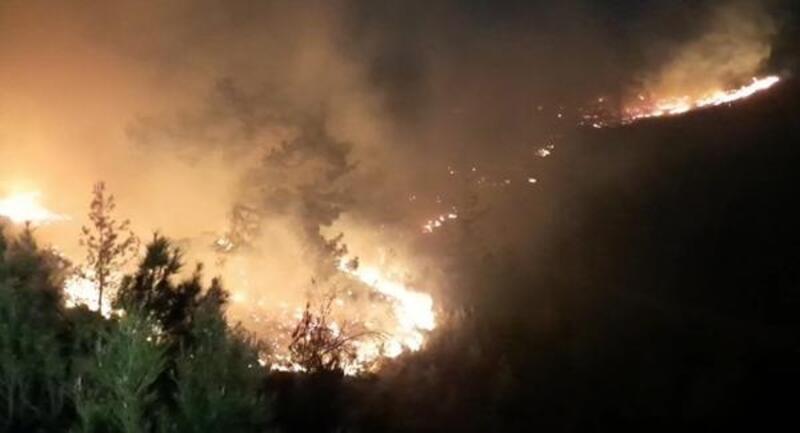 Manavgat'ta orman yangını