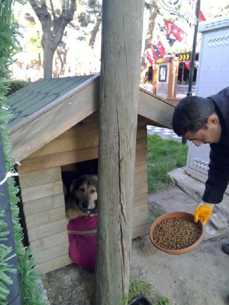Kırklareli'de sokak hayvanlarına mama desteği