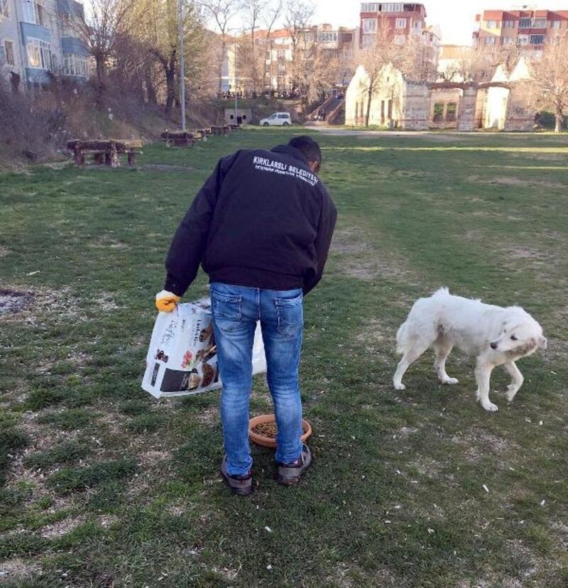 Kırklareli'de sokak hayvanlarına mama bırakıldı