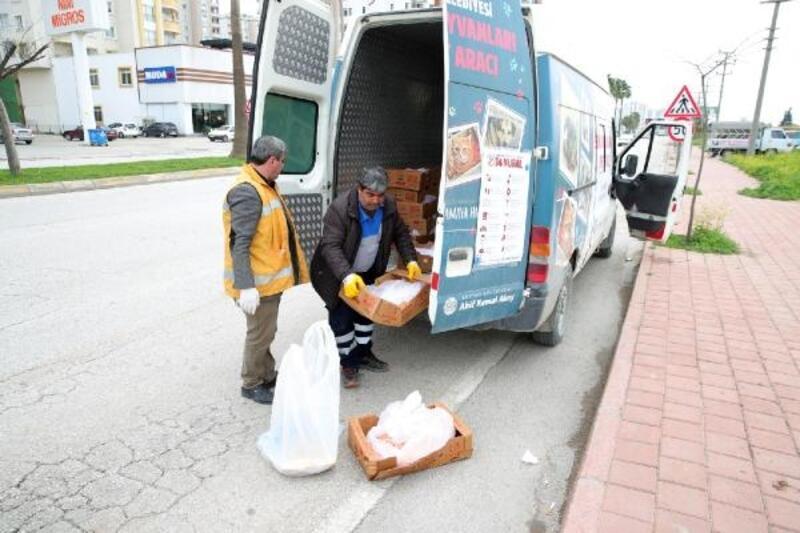 Seyhan Belediyesi'ndensokak hayvanlarına yiyecek desteği