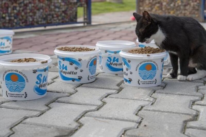 Mersin'de sokak hayvanlarına yiyecek bırakıldı