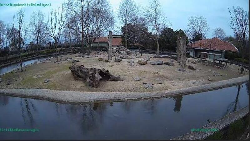 Bursa Hayvanat Bahçesi, internet üzerinden canlı izlenecek