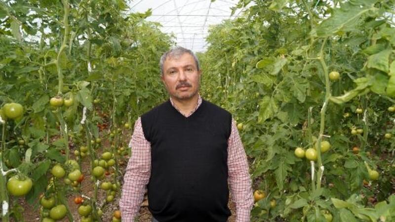 Üretici 2,5 liraya ürettiği domatesi 1,5 liraya satıyor