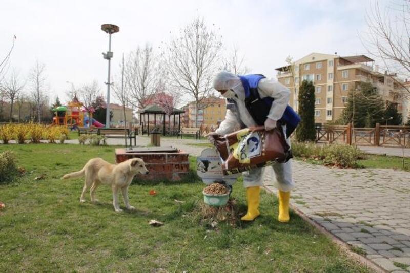 Çankırı Belediyesi, sokak hayvanlarını unutmadı