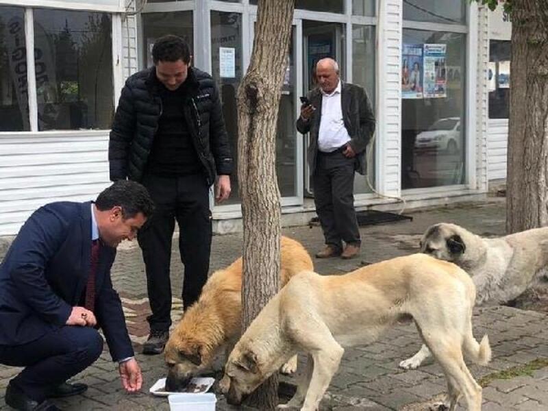 Kumlu'da sokak hayvanları unutulmadı