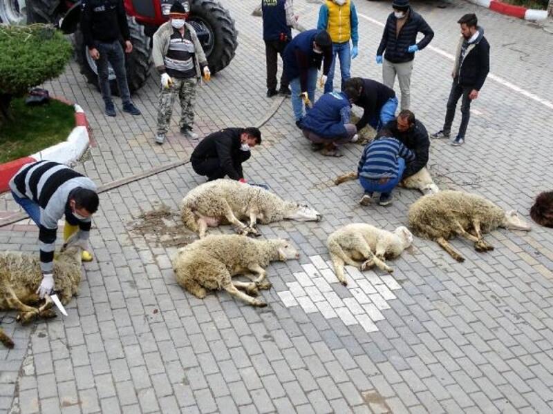 Koronavirüse karşı kurban kesip dua ettiler