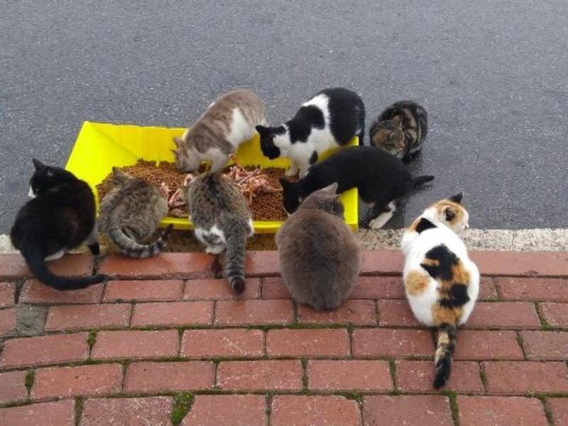 Kocasinan Belediyesi'nden sokak hayvanlarına mama