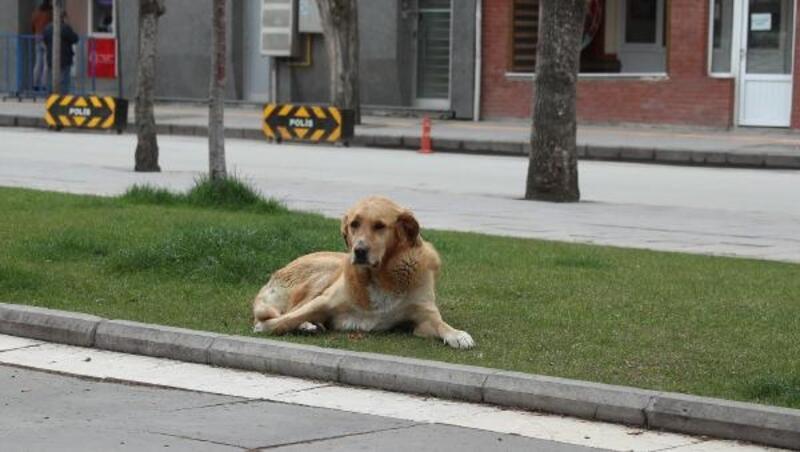 Eskişehir'de sokak hayvanları için mama ve su bırakıldı