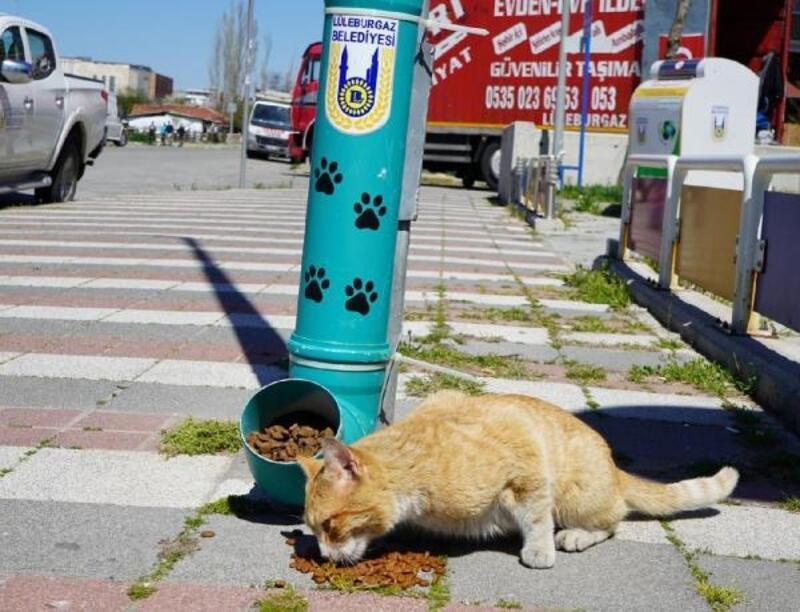Lüleburgaz Belediyesi, sokak hayvanları için yeni beslenme odakları koydu