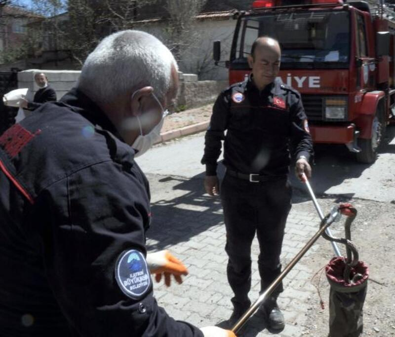 Bodrum katında yakalanan 3 yılan, doğaya bırakıldı