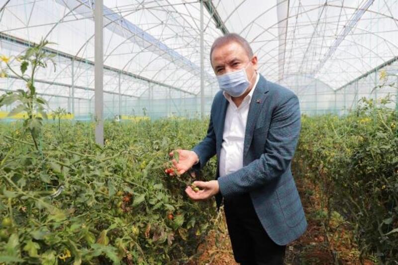 Başkan Böcek, Serik'te üreticileri ziyaret etti