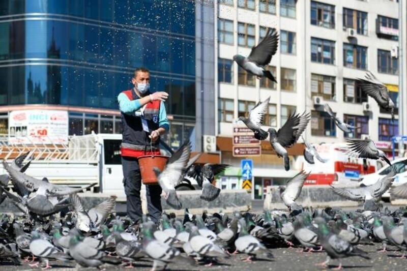 Büyükşehir Belediyesi'nden sokak hayvanlarına mama desteği