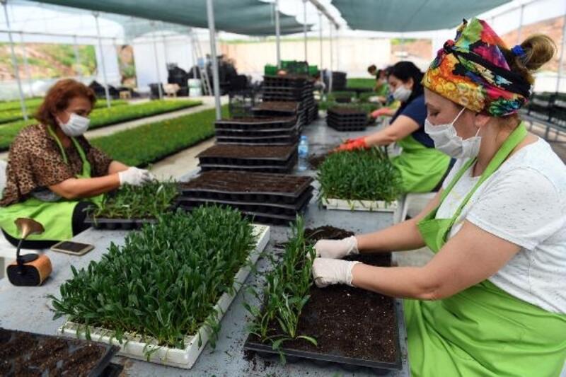 Yaz mevsimi için 500 bin çiçek toprakla buluşuyor
