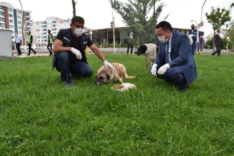 Beyoğlu, sokak hayvanlarını besledi