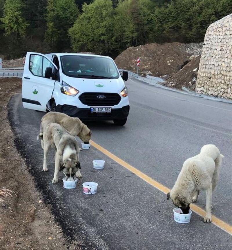 Osmangazi Belediye'si sokak hayvanlarını unutmadı