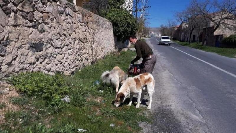Niğde'de sokak hayvanları için besleme çalışmaları sürüyor