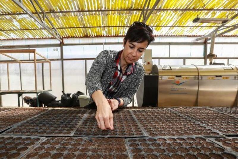 Yenimahalle'de organik gübre üretimi sürüyor