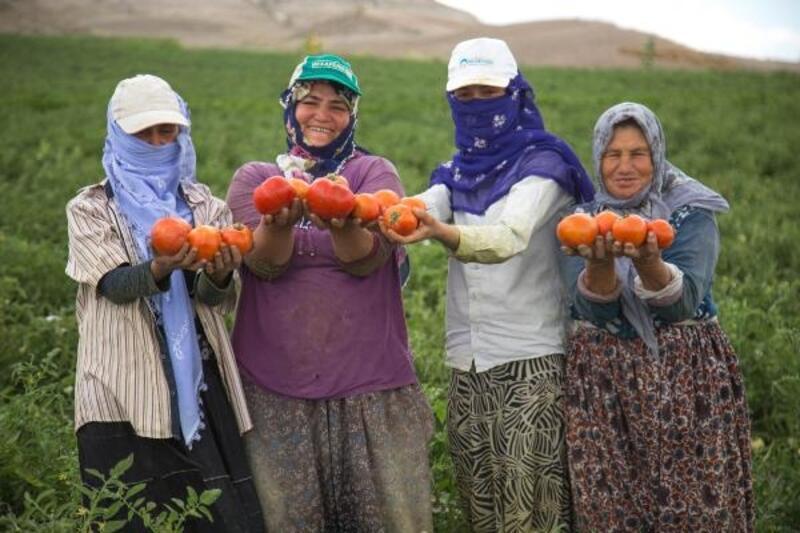 Başkan Yavaş: Çiftçilerimize 5 milyon domates ve biber fidesi desteğinde bulunacağız