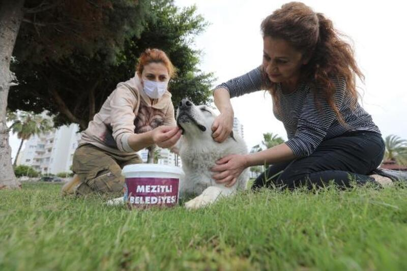Sokak hayvanları için 'Bugün de Bizden' olsun kampanyası