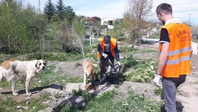 Gölbaşı'da sokak hayvanlarına mama desteği