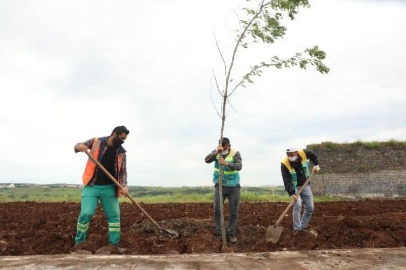 Büyükşehir Belediyesi'nce yeşillendirme çalışması