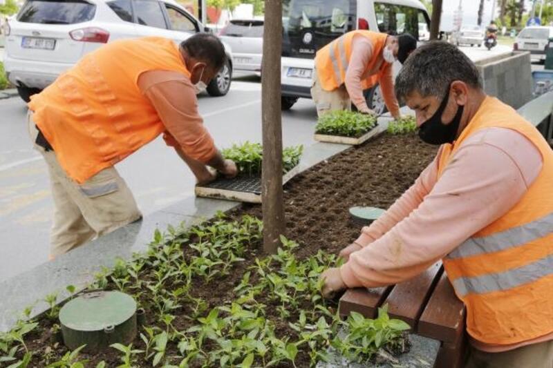 Büyükşehir Güllük Caddesi'ni 40 bin çiçekle süsleyecek