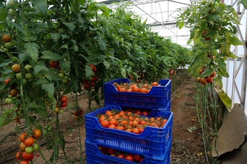 İhracatın lideri domates ve narenciye